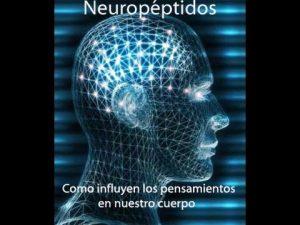 Neuropéptidos y eje psiconeuroendocrinoinmunológico