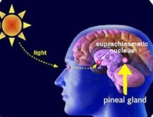 La luz y la glándula pineal
